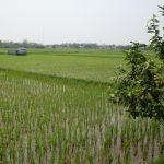 vietnam-dissemination-forum4